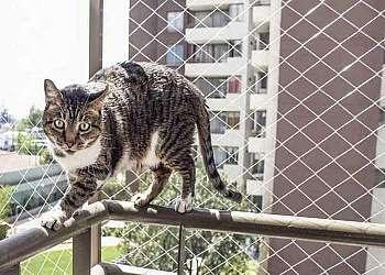 Fábrica de redes de proteção para animais