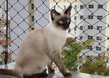 Tela de proteção para gatos Guararema