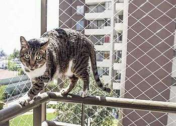 Tela de proteção para gatos Osasco